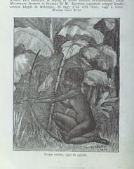 """British Library digitised image from page 758 of """"A legsötétebb Afrikában ... Egyetlen jogosított, az angol eredetigöl fordított magyar kiadás [Wi [With the original illustrations.] ]"""""""