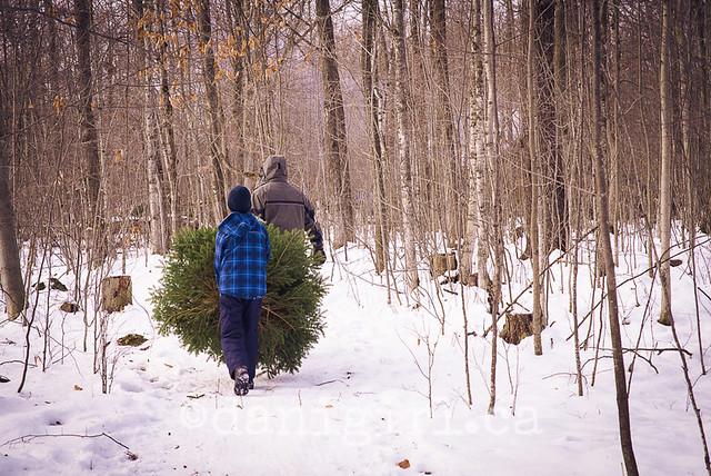 圣诞树探索2013