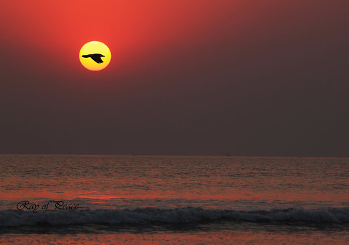 pakistan sunset sea sun bird love beach canon lost flying seaside waves ray peace emotion away harmony end feeling standard karachi seashore seaview ending raise gain rayofpeace kirannasir
