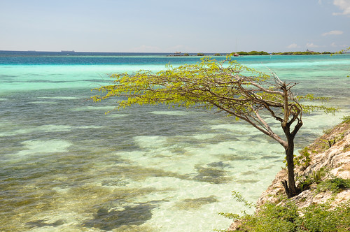 beach playa aruba netherlandsantilles antillasholandesas mangelhalto mangelhaltobeach flickrtravelaward