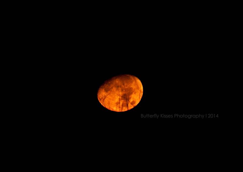 moon-0037 web