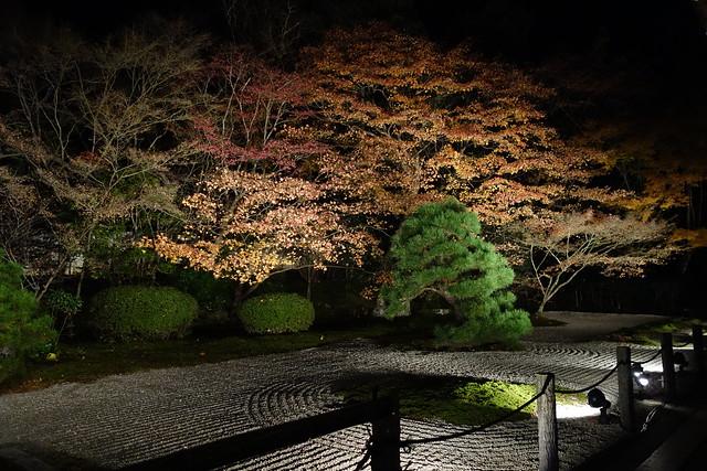 Photo:夜楓點燈 By Richard, enjoy my life!