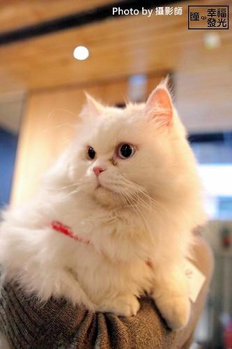 cat_5th (6)