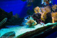 Monaco Aquarium: Moray Eel and Lionfish