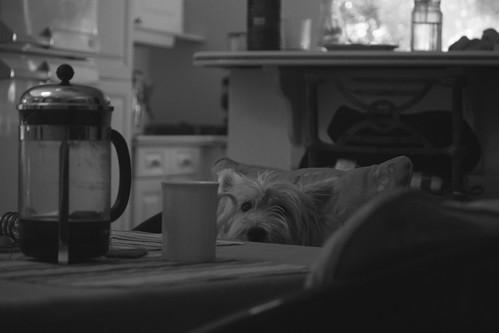 Leica quiere su café by MandoBarista