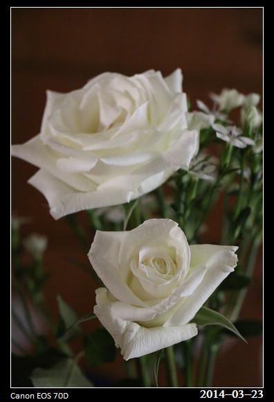 2_20140323_Rose2