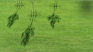 Grasveld met drie bomen