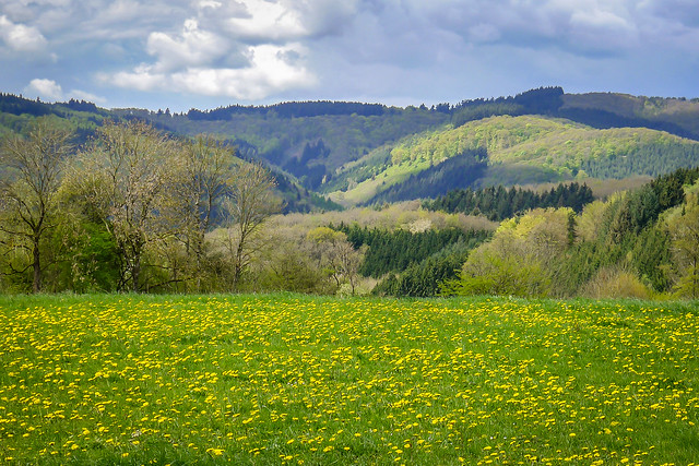 Prümtal landscape 9