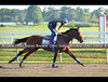 Triple Crown winner and Haskell contender American Pharoah gallops at Monmouth Park on Saturday morning