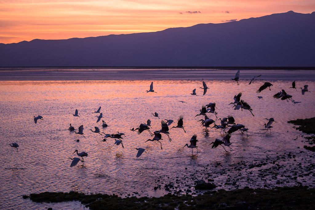 Storks At Sunrise Over Lake Natron