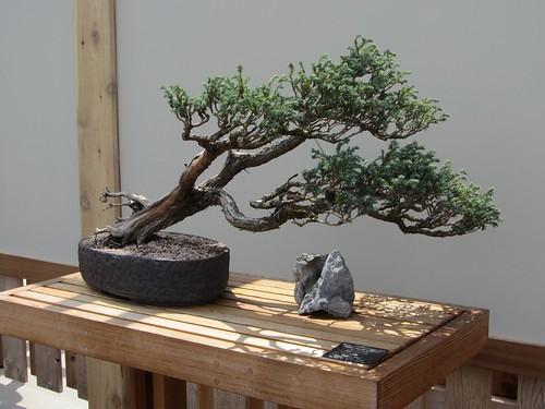 bonsai0714