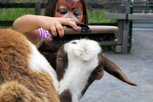 MZ - madeline brushing goat-001