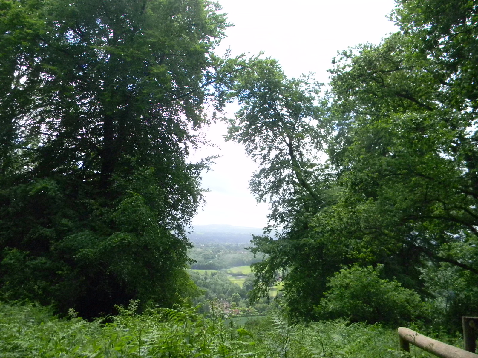 On Shoulder of Mutton Hill Petersfield to Selbourne
