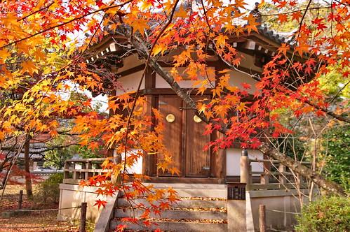 【写真】2012 紅葉 : 清凉寺/2020-09-21/IMGP7822