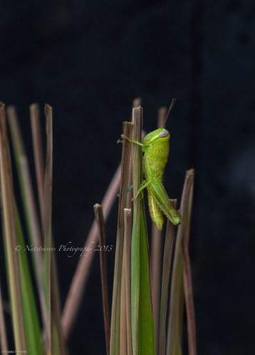 Some people walk in the road , others just get climb :) by Nathalie Stravers