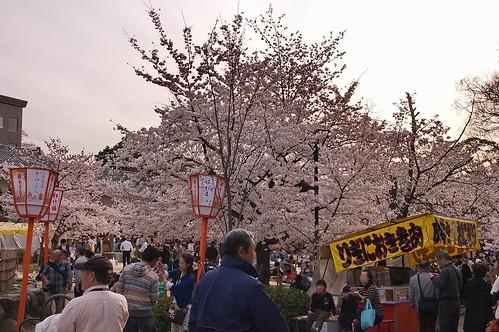 【写真】2013 桜 : 円山公園(2)/2020-11-17/IMGP9283