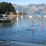 Paddle Boarding in Akaroa - New Zealand