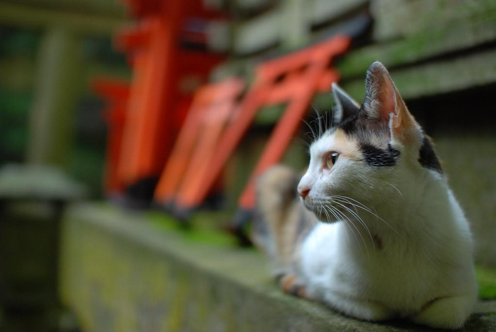 お塚あたりに居ついているらしい猫