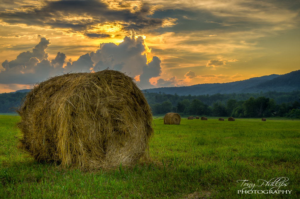 Hay Rolls At Sunset A Field Of Hay Rolls At Sunset In Cade