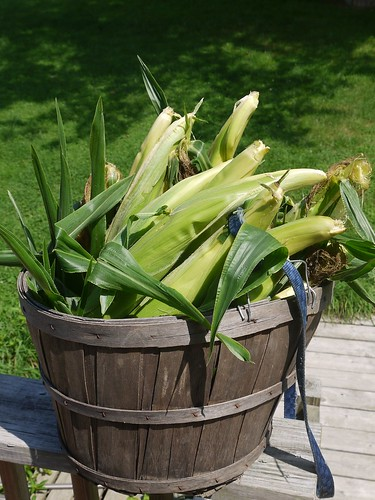 Sweet Corn from our Garden