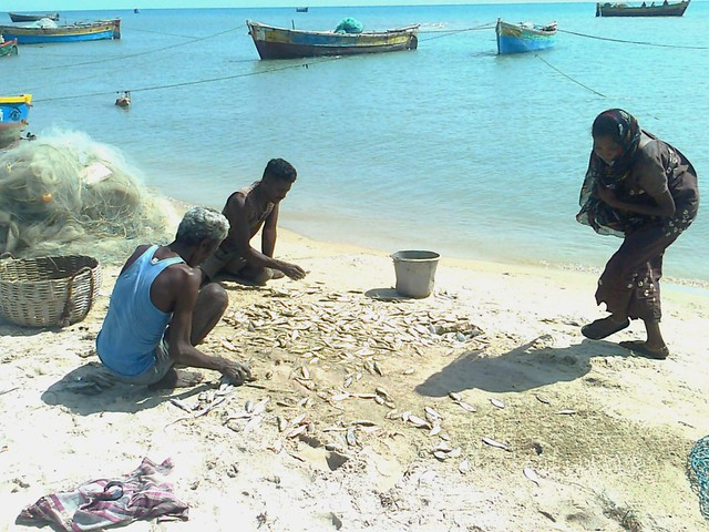 Women also participate in the sorting and the drying of fish after the catch of the day is hauled on the beach.