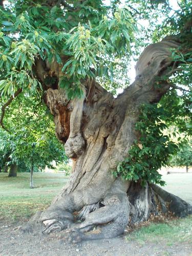 arbre_greenwich