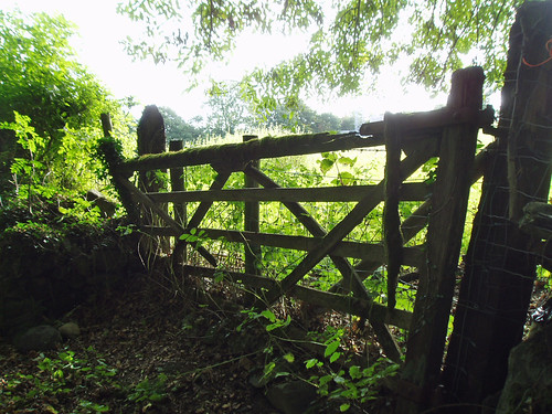 Old mossy gate by Helen in Wales