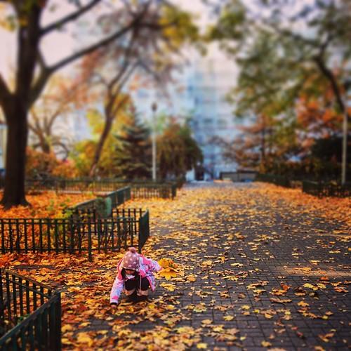 Złota Jesień / Golden Autumn