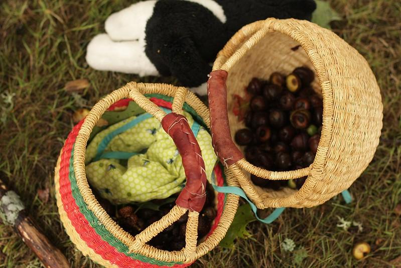 acorn gathering