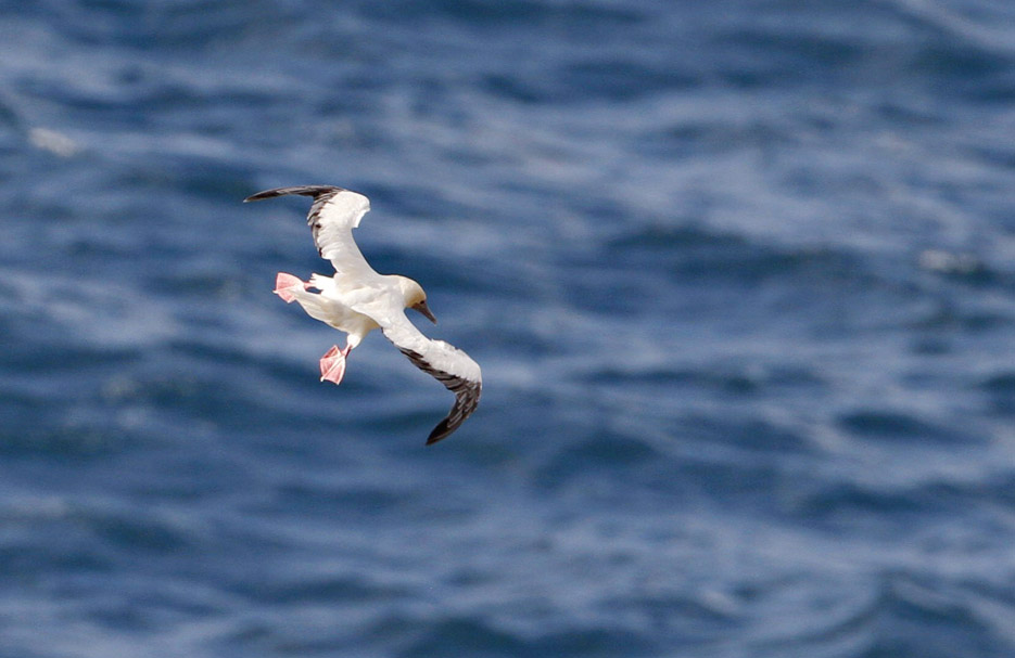 100513_08_list_redFootedBooby09