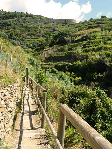 Laderas estructuradas en terrazas donde se cultiva el vino en Cinque Terre