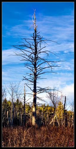 unitedstates massachusetts hike athol longpond fall2013