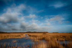 Minsmere RSPB Reed bed