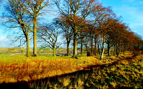 Antonine Wall near Cumbernauld, Scotland