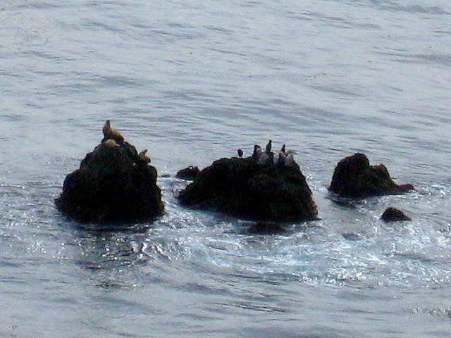 point dume sea lions