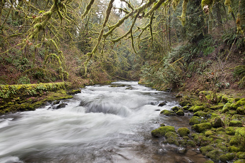 longexposure mill water creek forest woodland landscape washington moss steam cedar wa flume cedarcreek gristmill grist cedarcreekgristmill canoneos5dmarkii canon5dmarkii canonef2470mmf28liiusm