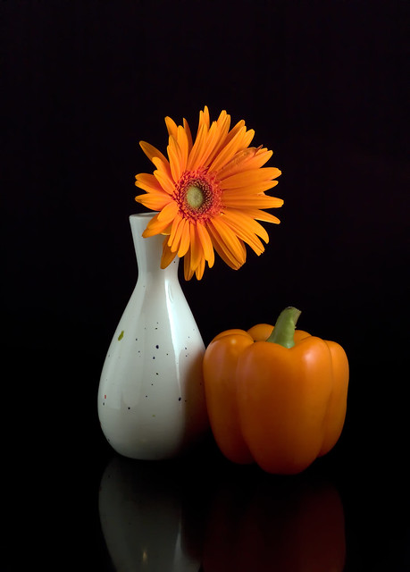 what is still life photography