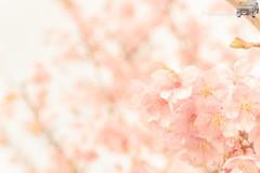 WEB-LR_20140304_0056.jpg
