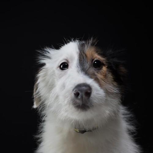 Dogs Trust - Dorry