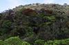 Cloud forest in Horton plains