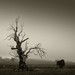 bonniedoon-fog-dead-tree-victoria by Leanne Cole