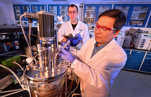 Molecular biologist Z. Lewis Liu (right) and technician Scott Weber add a new yeast strain to a corncob mix to test the yeast's effectiveness in fermenting ethanol from plant sugars.  The yeast naturally produces an enzyme that helps release and degrade sugars from biomass, and that could help reduce ethanol production costs.
