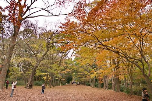 【写真】紅葉 : 糺の森
