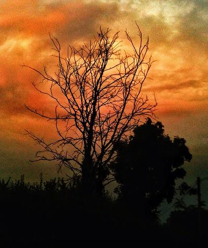uploaded:by=flickrmobile flickriosapp:filter=nofilter