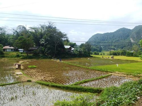 Sulawesi13-Rantepao-Makale (21)