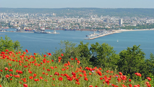 bridge flowers red sea vacation holiday port view harbour bulgaria poppy poppies blacksea blackseacoast