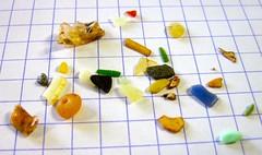 一隻短尾鸌鳥胃中的塑膠碎粒,圖片由高田秀重提供。