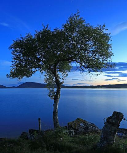Blue Hour Tree.