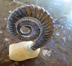 spiral, macro photography, fossil, close-up,