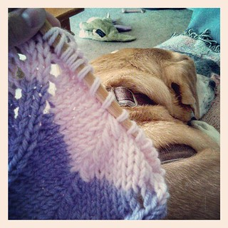 Lazy Sunday #knitting with Sophie snoozing next to me and #football on TV #lifeisgood #knitstagram #dogstagram